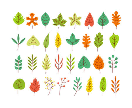 Set of different type and color season leaves isolated on white background collection design element