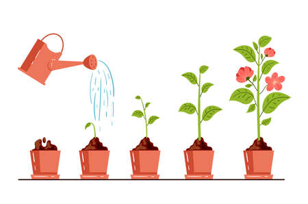Stage steps of flower plant growth process gardening concept. Vector graphic design cartoon modern style illustration