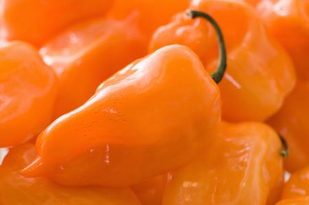 habanero: Hot habanero chilli peppers. Close up, selective focus Stock Photo