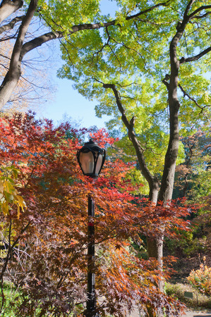 ''wide angle'': Autumn colors in Central Park, NY. Wide angle, polarizing filter