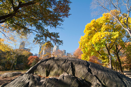 polarization: Fall in Central Park. Wide angle, polarization filter