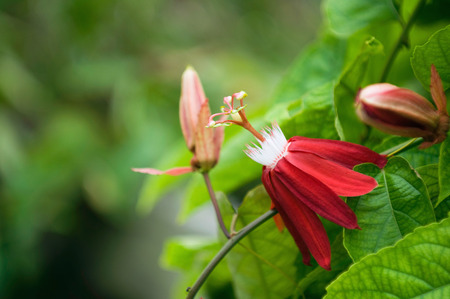 selective focus: Red tropical flower, close up, selective focus