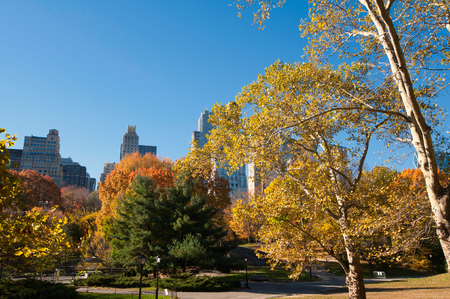 ''wide angle'': Morning sunlight in Central Park. Wide angle, polarizing filter Stock Photo