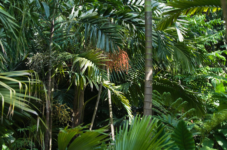 vegetation: Lush tropical vegetation