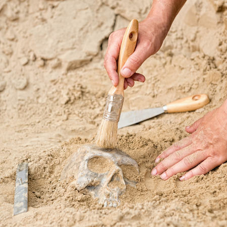 archaeological site: Unearthing ancient human skull at archaeological site