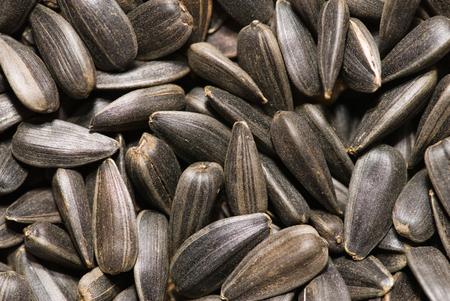 sunflower seed: Sunflower seed background
