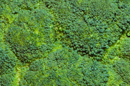 brocolli: Brocolli background, detailed close-up, flat focus