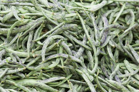ejotes: jud�as verdes frescas, variedad de colores p�rpura. enfoque selectivo