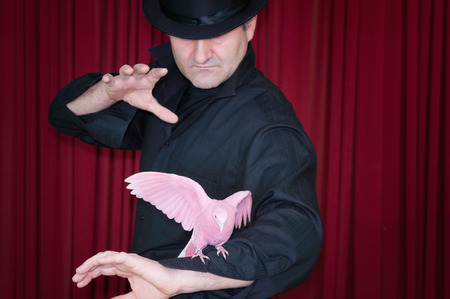 magic trick: Magician performs a magic trick with pink pigeon