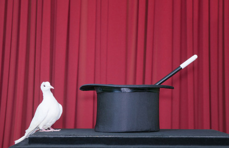 pidgeon: White pidgeon with magic hat on the stage, wondering what to do