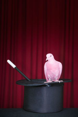 stage props: Pink pigeon, top hat and magic wand on stage Stock Photo