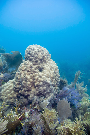 reefscape: yellow coral formation Stock Photo