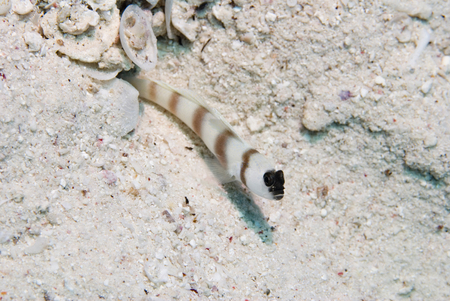 goby: Goby