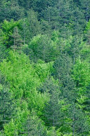 deep focus: Fresh green forest, vertical background, deep focus