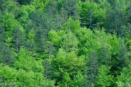 deep focus: Fresh green forest background, deep focus