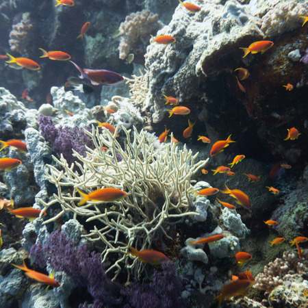 spiny: Spiny row coral surrounded with tropical fish