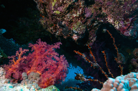 teaming: Coral crevice teaming with sea life. Selective focus, wide angle