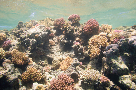 under the surface: Coral formations thriving in the sun just under surface of a tropical sea Stock Photo