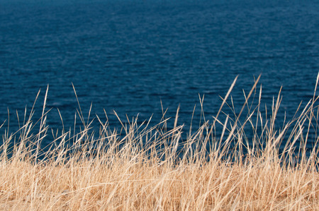 contrasted: Background of highly contrasted dry grass against the sea. Shallow depth of field, polarizing filter