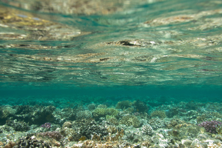beneath the surface: Beneath the surface of a coral sea. Wide angle, deep focus. Stock Photo