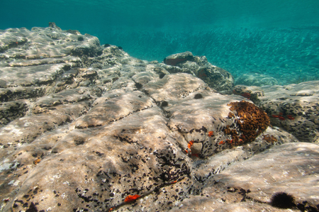 ambient light: Rocky sea floor. Shallow water, ambient light