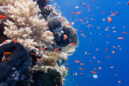 soft corals: Several types of hard and soft corals with school of tropical fish Stock Photo