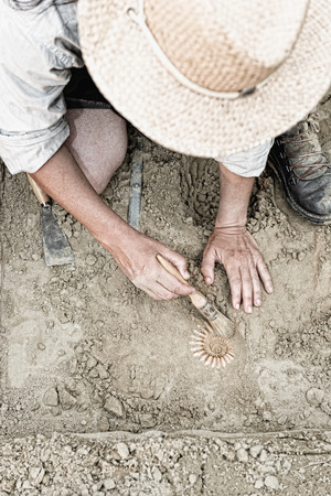 geologic: Paleontologist working in the field, recovering ancient ammonite fossil Stock Photo