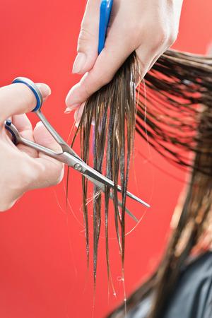 haircutter: Haircutter cutting hair