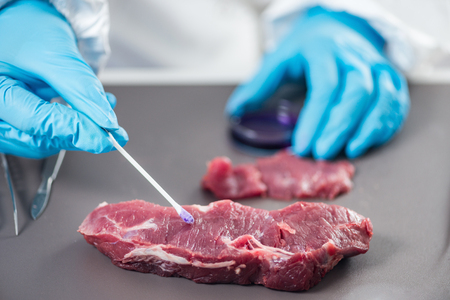 Quality control expert inspecting at meat  in the laboratory Stockfoto