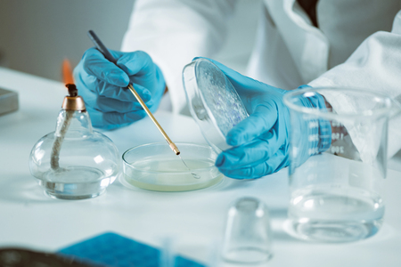 Microbiology, technician working  in laboratory  Banque d'images