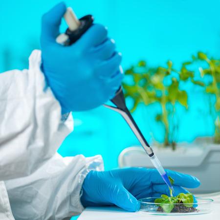 Biologist Examining Plant Roots Stock Photo