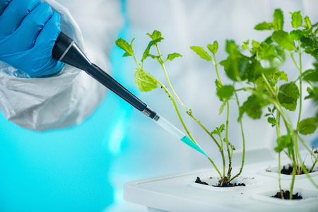 Biologist working with seedlings in plant laboratory Stock Photo
