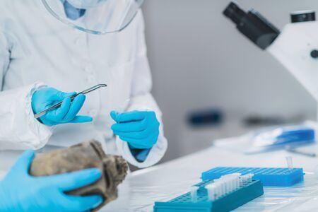 Bioarcheology. Archaeologist analyzing human skull in DNA archaeology lab. Foto de archivo