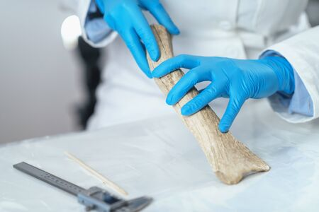 Archaeology researcher in laboratory demonstrates how antler was used as tool in prehistory. 스톡 콘텐츠
