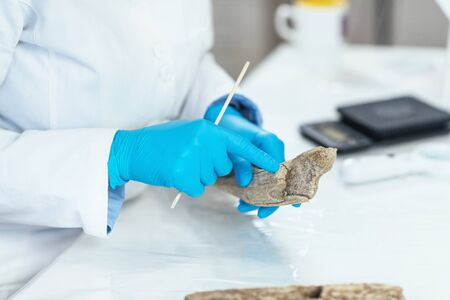 Archaeology researcher in laboratory analyzing ancient antler tool. 스톡 콘텐츠