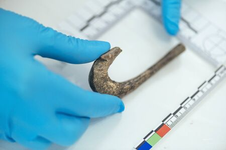 Young archaeologist measuring ancient hook with straightedge in archeology lab.