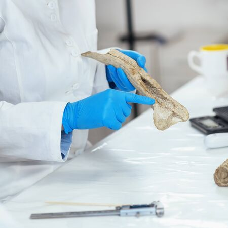 Archaeology researcher in laboratory demonstrates how antler was used as tool in prehistory.