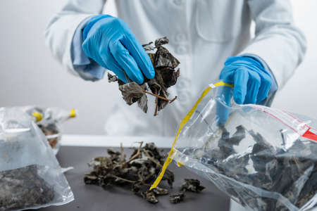 Organic Certification Process in Laboratory.  Sample Preparation for Pesticide Testing in Laboratory Zdjęcie Seryjne