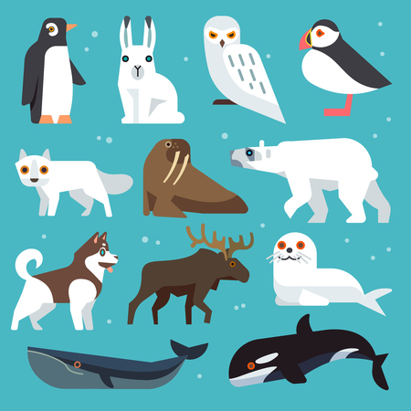 puffin: Polar animals icons. Polar birds and arctic northern animals vector set in flat style