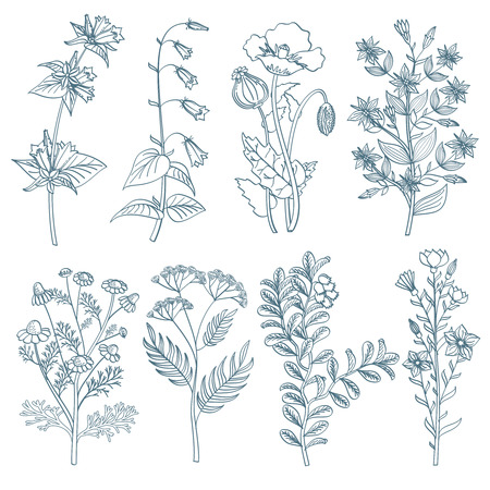 healing: Herbs wild flowers botanical medicinal organic healing plants vector set in hand drawn style. Herb medicine plant and illustration of botanical plant for healing