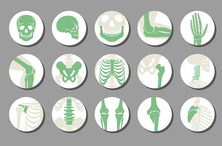 icons: Orthopedic and spine vector icons. Human bone of illustration and anatomy skeleton bone x-ray image