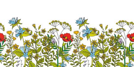 シームレスなベクトル花の境界線色ハーブや野生の花。ハーブの葉芳香花と図有機花のシームレスです  イラスト・ベクター素材