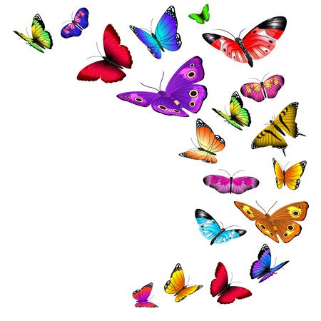 vector de fondo con mariposas volando. Flujo de mariposas silvestres y verano ilustración mariposa con alas de color