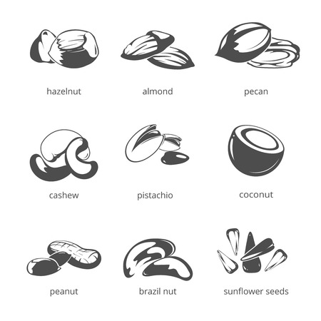 pecan: Nuts vector icon set. Natural nuts for health, hazelnut and almond, pecan and cashew nuts illustration