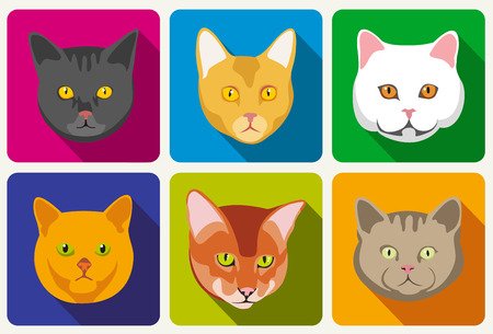 muzzle: Cat portraits vector collection. Set of head cat and muzzle of cats with eyes and whisker illustration