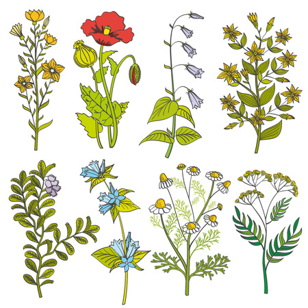 허브와 야생 꽃 빈티지 벡터 컬러 일러스트. 잎과 여름 꽃 세트와 봄 화려한 꽃 일러스트