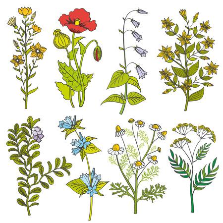 Hierbas y flores silvestres vintage ilustración vectorial a color. Conjunto de flores de verano y flores de colores de primavera con hojas Foto de archivo - 60003141