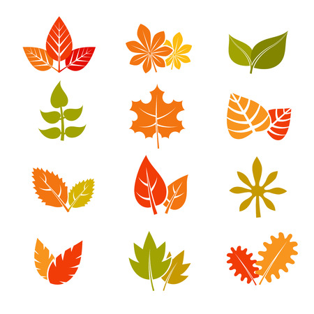 Multicolor autumn leaves flat vector icons. Fall feuille leaf collection. Set of autumn leaves, illustration maple leaf