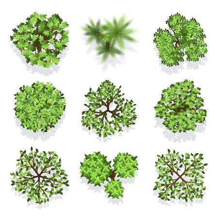 Bäume Draufsicht für Landschaftsgestaltung und Karte gesetzt. Grüner Baum für den Garten, Abbildung Bäume für Wald Vektorgrafik