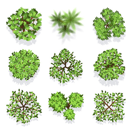 Trees top view set for landscape design and map. Green tree for garden, illustration trees for forest
